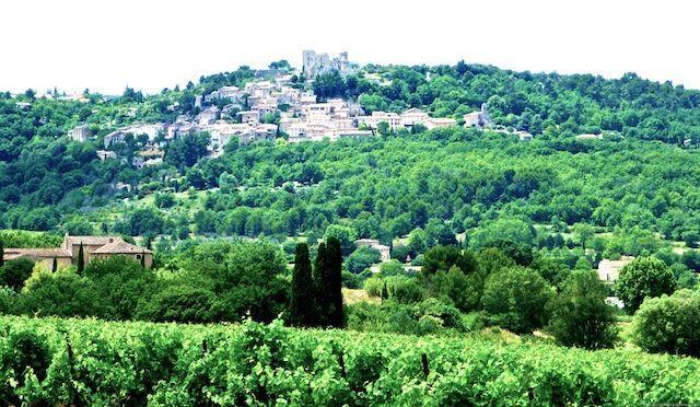 Lacoste across the vineyards @ShutrsSunflowrs