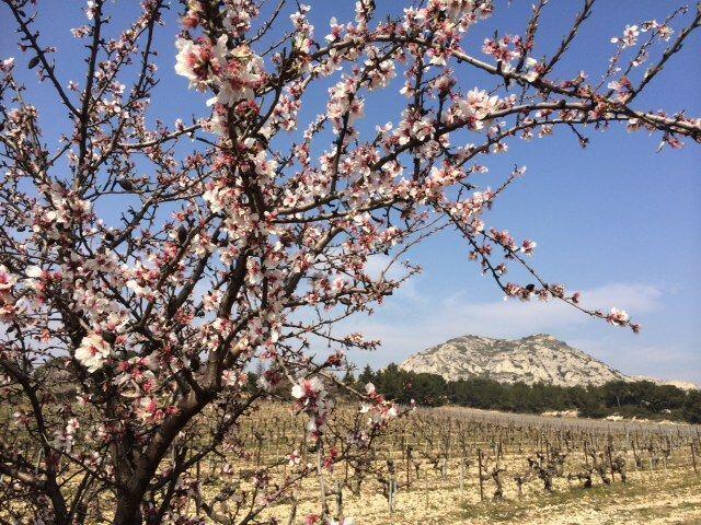 Spring en route to Les Baux de Provence @alabreche_annie