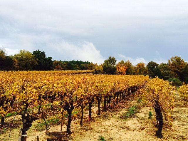 vineyards at La Bastide d'Engras @alabreche_annie