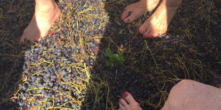 Grape Stomp @LesPastras @Susan_PWZ