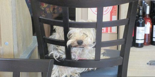 Provence Dog @CobblestonesandVineyards