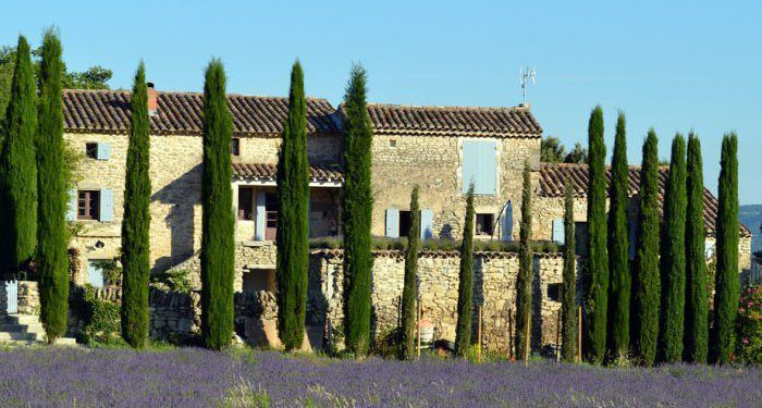 Cypress trees in #Provence @margo_lestz