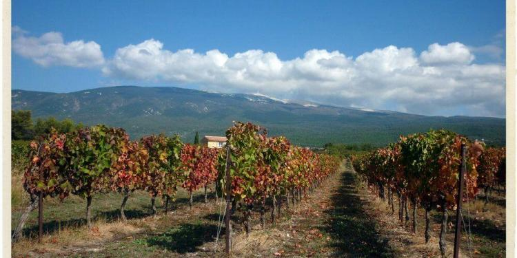 Rhone Valley Vineyards near Vacqueyras @TableenProvence