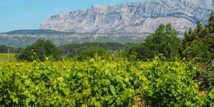 Mont Saint Victoire @Susan_PWZ #WinesofProvence