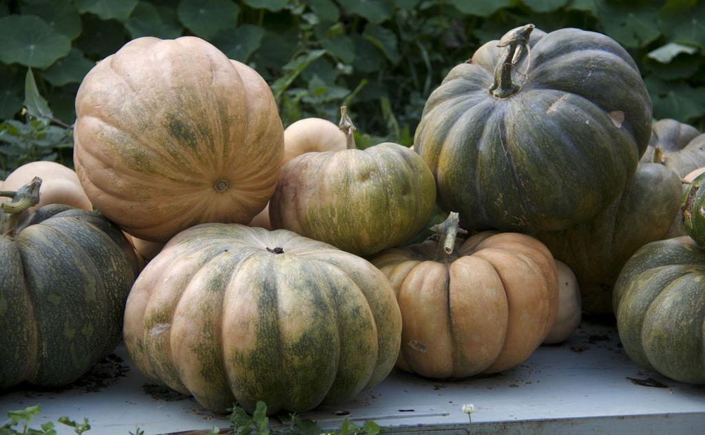 Pumpkins #TastesofProvence @PerfProvence