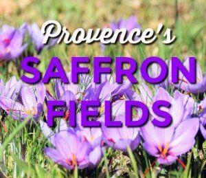 Saffron Farming in Provence @GirlGoneGallic