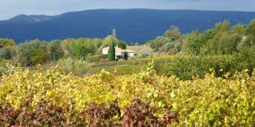 Luberon vineyards near Menerbes Provence