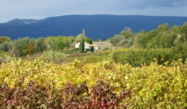 Luberon vineyards near Menerbes #ExploreProvence @ShutrsSunflowrs