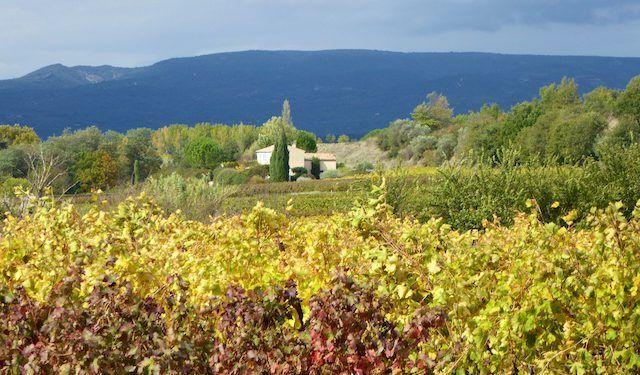Luberon vineyards near Menerbes #ExploreProvence @ShutrsSunflowrs