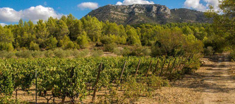 Domaine Saint Andrieu @Susan_PWZ #WinesofProvence