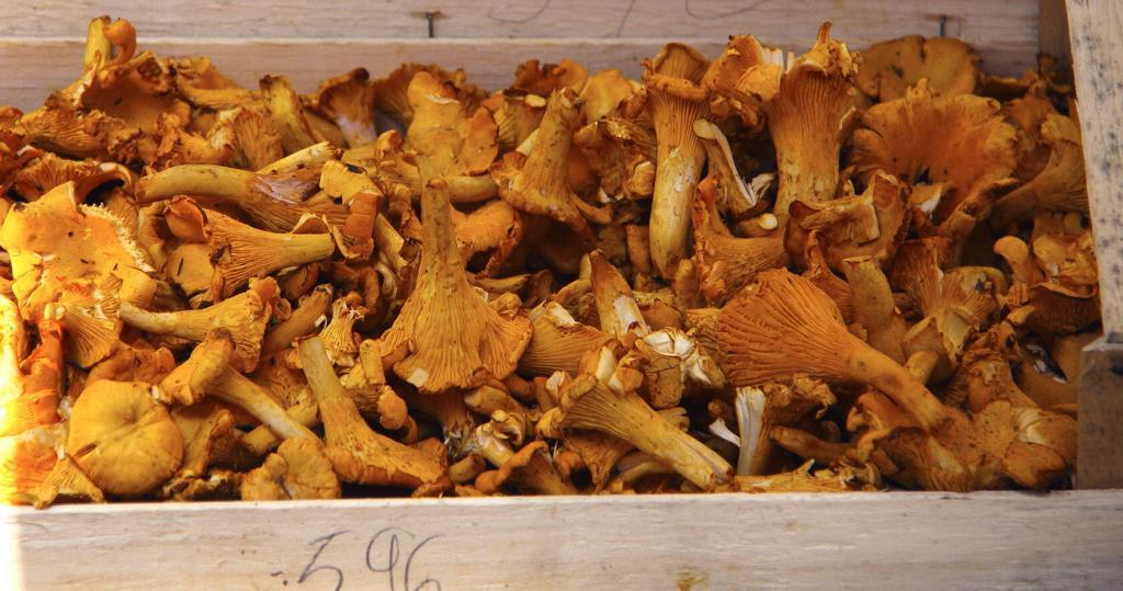 Wild mushrooms #TastesofProvence @PerfProvence