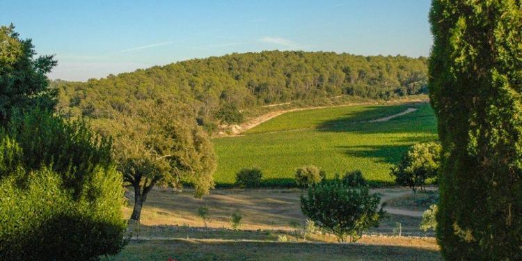 Domaine de L'Amaurigue Wines of Provence @Susan_PWZ