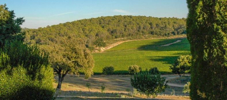 Domaine de L'Amaurigue Wines of Provence @Susan_PWZ