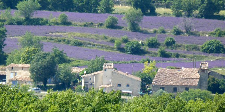 lavender-fields-in-provence @deb_lawrenson