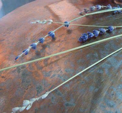 Lavender in Provence @deb_lawrenson