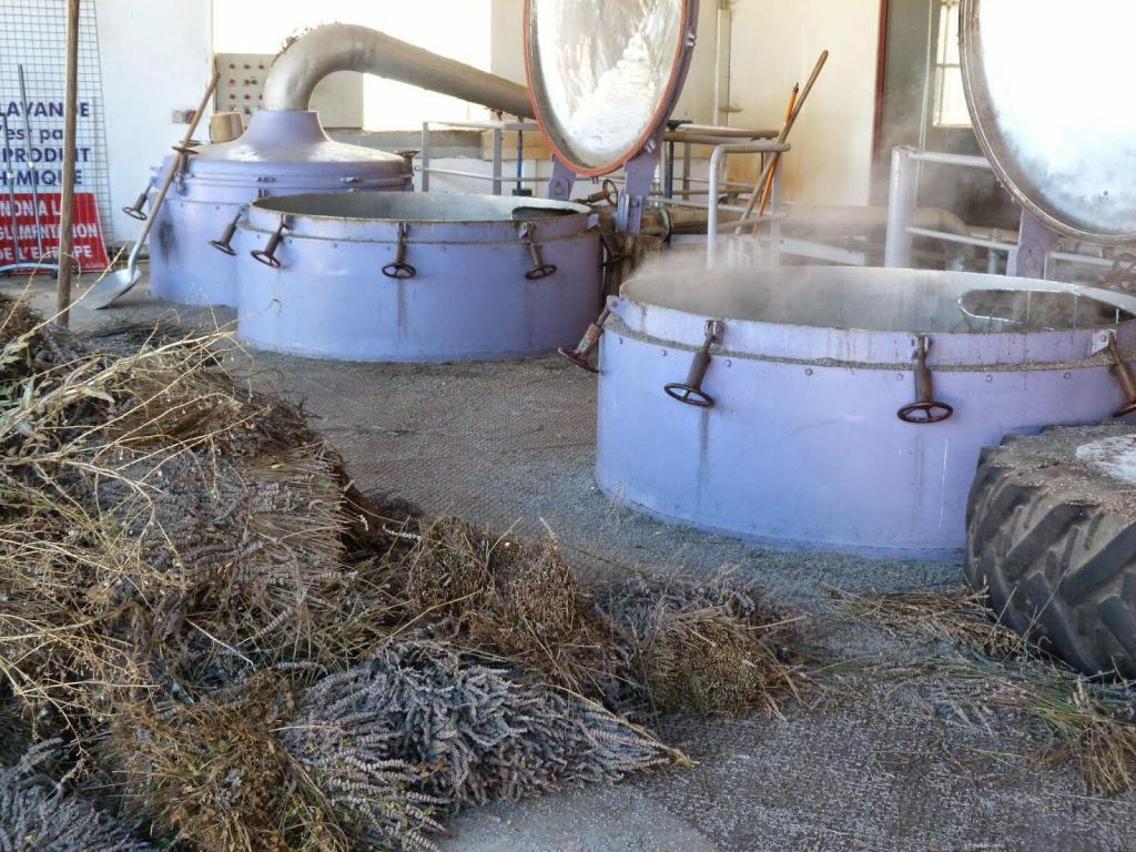 Distillery Lavender in Provence @deb_lawrenson