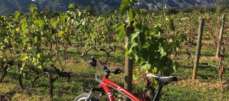 Perfectly Provence Video Alpilles Mountains in Autumn