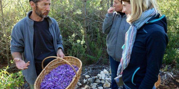 Provence Saffron in Cotignac