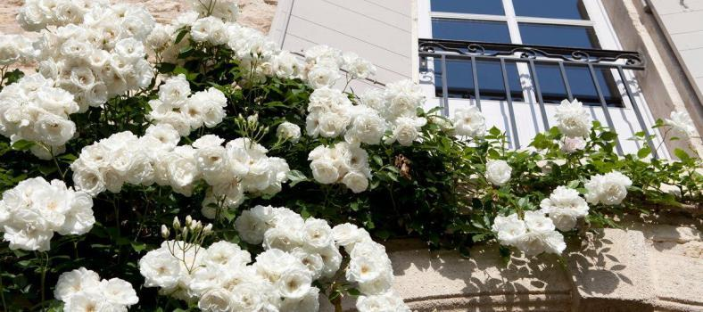 Flowers in St Remy by @frenchessence