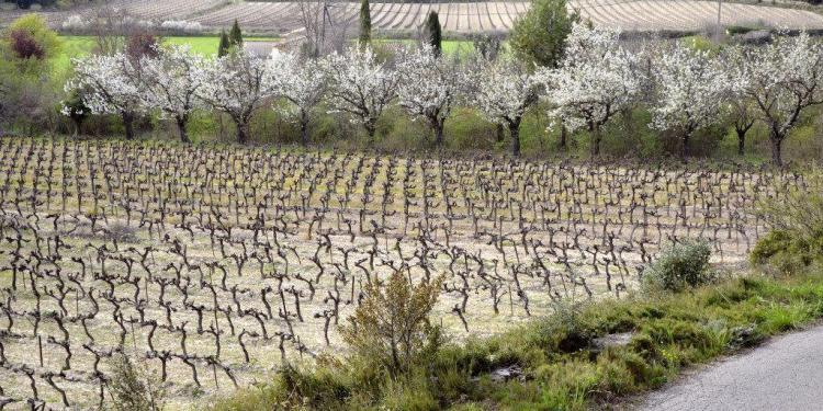 Vineyards near les Baux in Provence @CuriousProvence