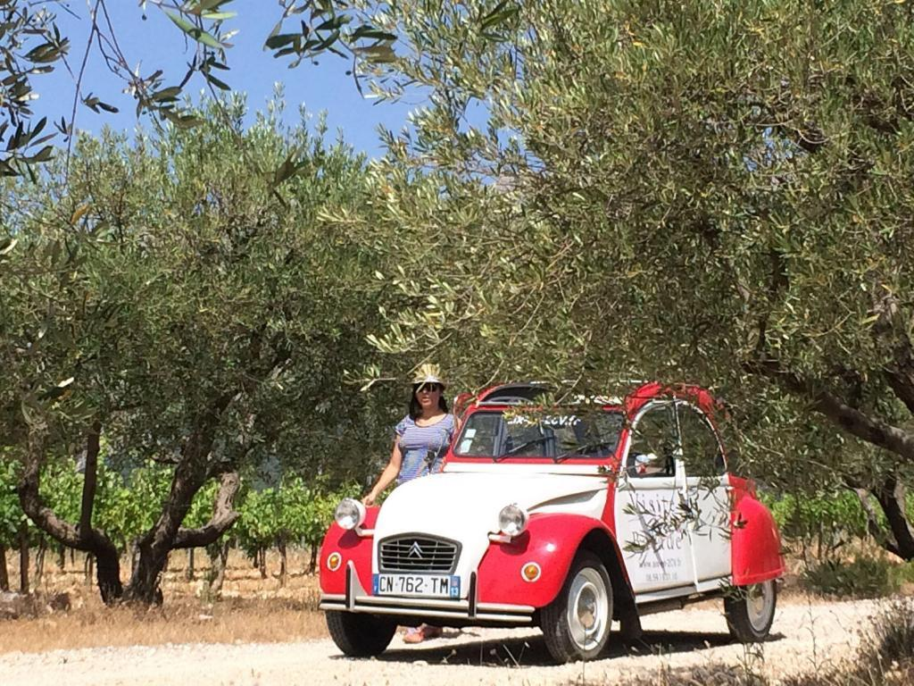 Aix en Provence 2CV Experience visiting the olive groves