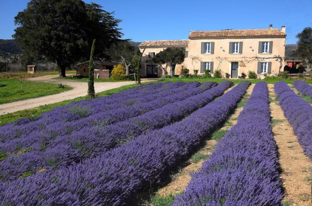 Detox in the Luberon Domaine de Saint Jacques and lavender