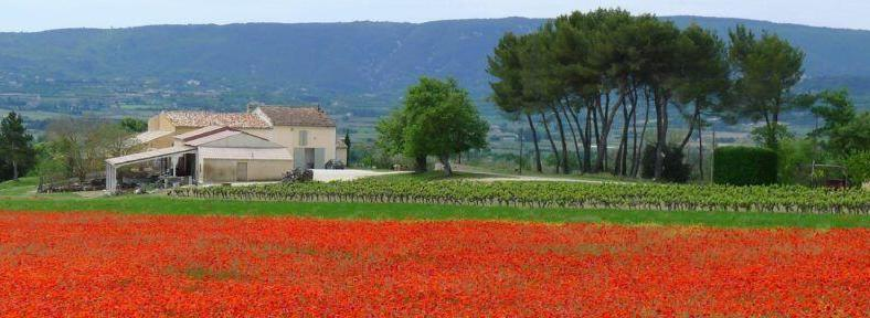 Provence Poppy Field View @keith_vansickle