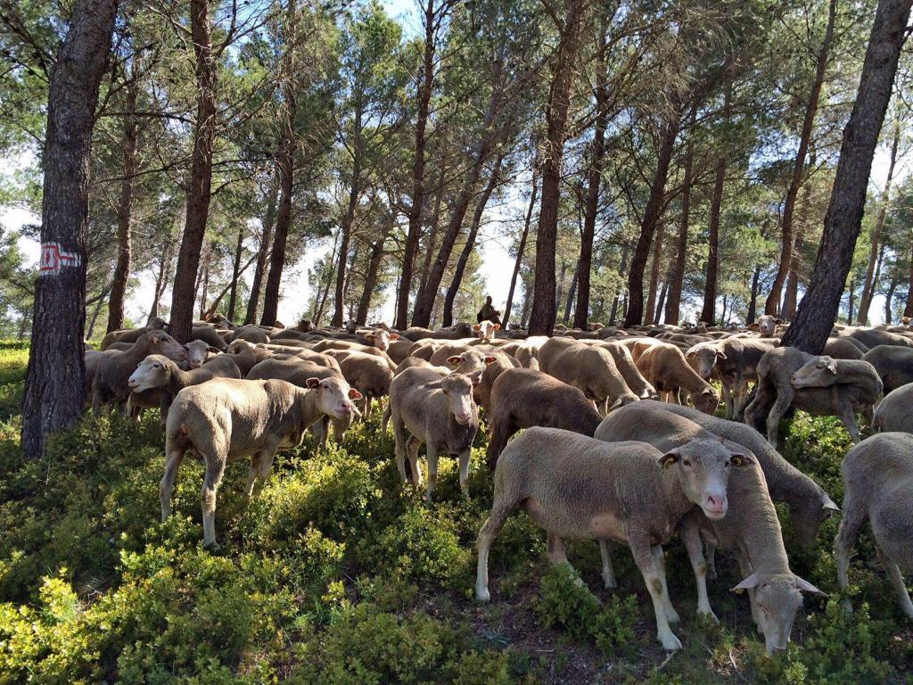 Shepherds and sheep in Provence @keith_vansickle