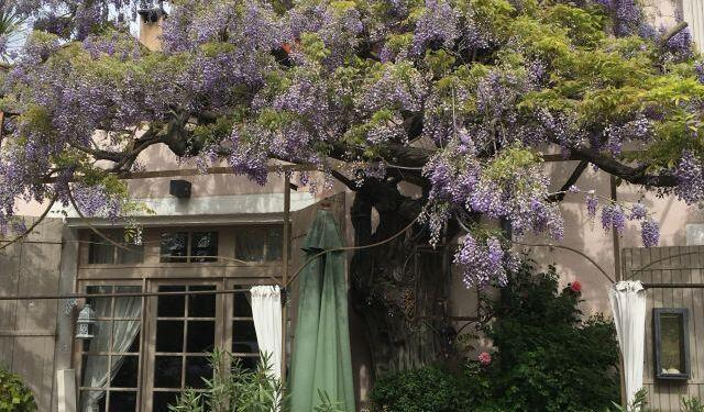 Our Year in Provence