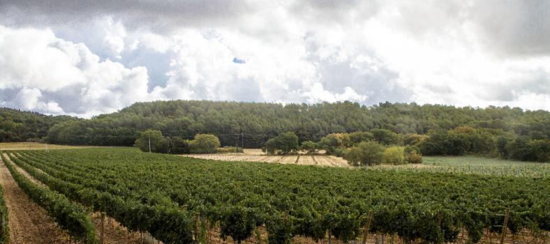 Domaine de Fontenille Vineyards