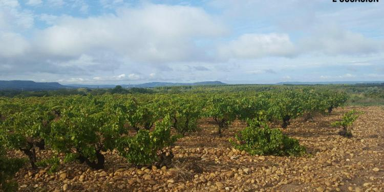 Vineyard View Lirac Loccasion