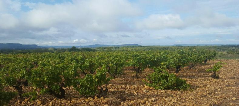 Vineyard View Lirac Loccasion