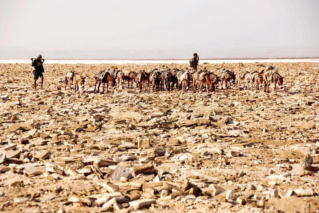 Jaulin Jaulin Ethiopia shepherds