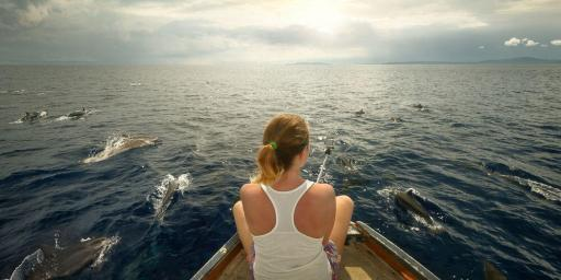 Yacht Charter French Riviera Dolphins Whales