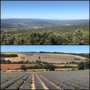 Riding Lavender Fields Provence