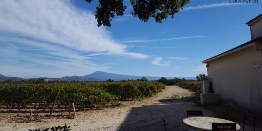 Montirius Biodynamic Winemaker vineyards