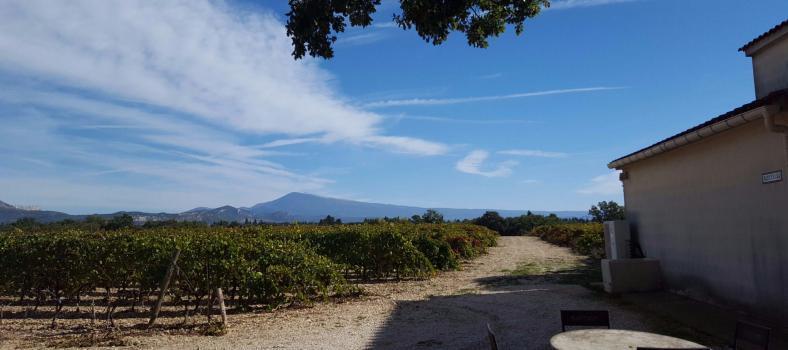 Montirius Biodynamic Winemaker vineyards