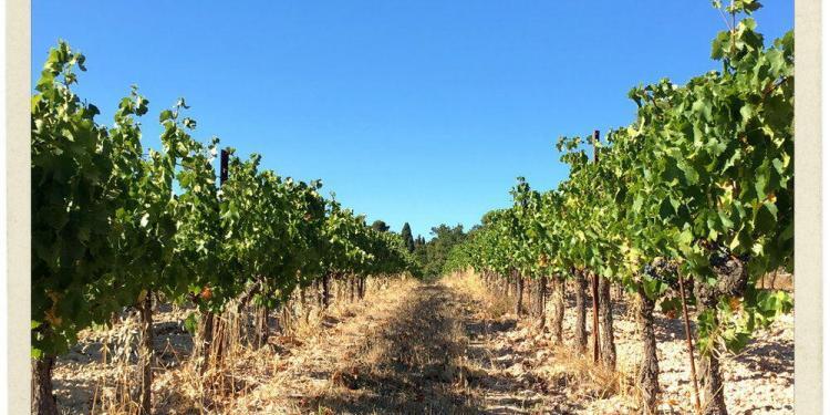 Vines Vineyards Happy Provence