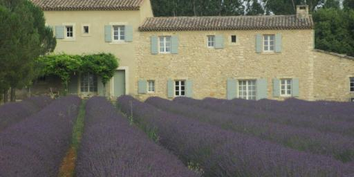 Purple Lavender Luberon Provence