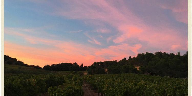 Sun setting over the vines at Le Clos de Caveau Provence Love