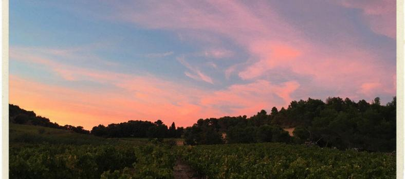 Sun setting over the vines at Le Clos de Caveau Provence Love