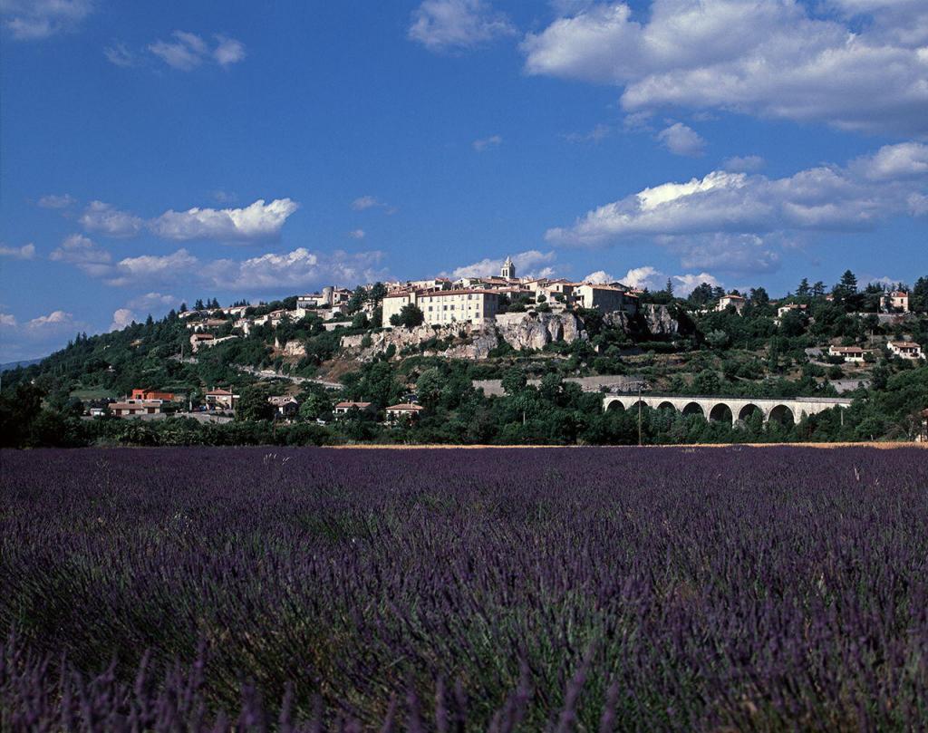 Bindu Trips Provence Sault Lavender Field Paul Shawcross