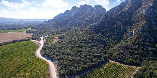Château Romanin Wine Alpilles