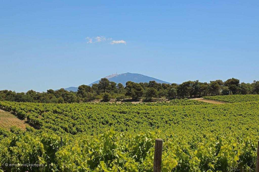 Dentelles vineyard Mt Ventoux View Holiday Rentals Provence Emotional Escapes
