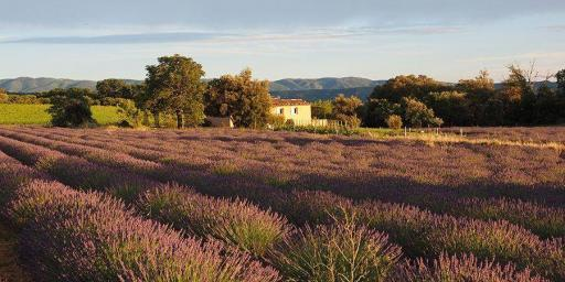 Provence During Autumn Emotional Escapes