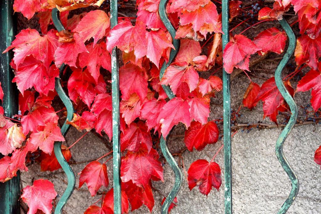 Explore Breathtaking Provence Fall