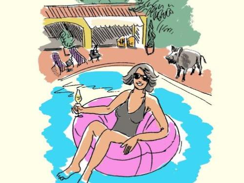 Surviving Provence Book Barbara Farber