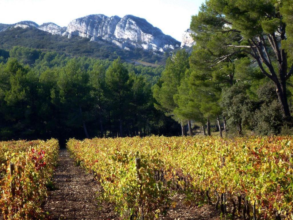 Experience Provence Explore Provence Tour Vineyards