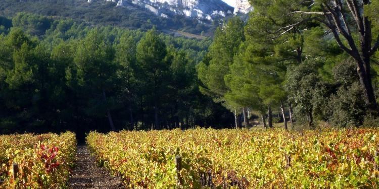 Experience Provence Explore Provence Tour Vineyards