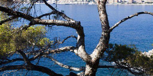 Cote d'Azur Lifestyle Mediterranean Twisted Pines @MKSeales